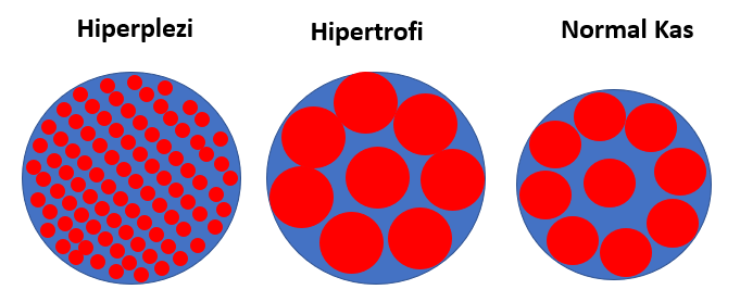 kas kuvveti için hipertrofi ve hiperplezi