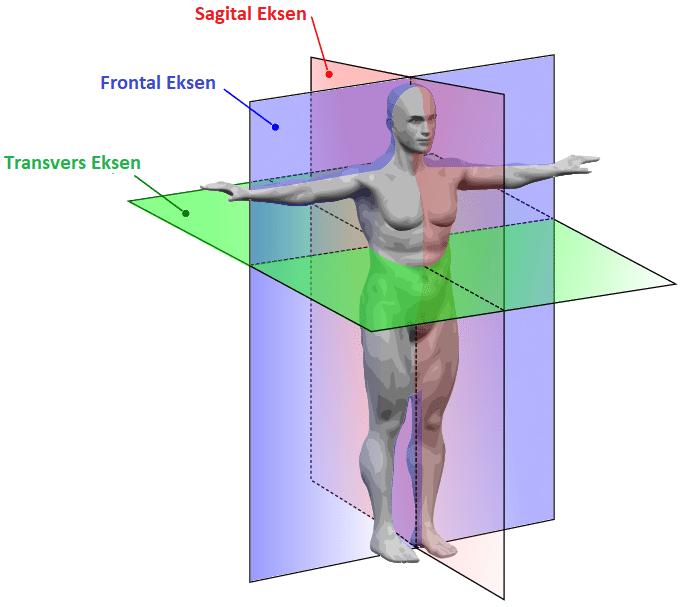 Anatomik düzlem ve eksenler
