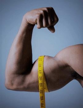 Biceps Çevre Ölçümü, somatotip
