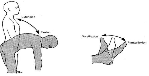 düzlem ve eksene göre Fleksiyon ve ekstansiyon