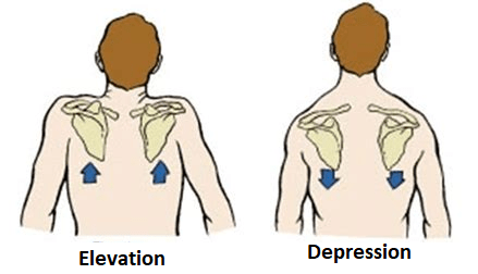 Elevasyon ve depresyon
