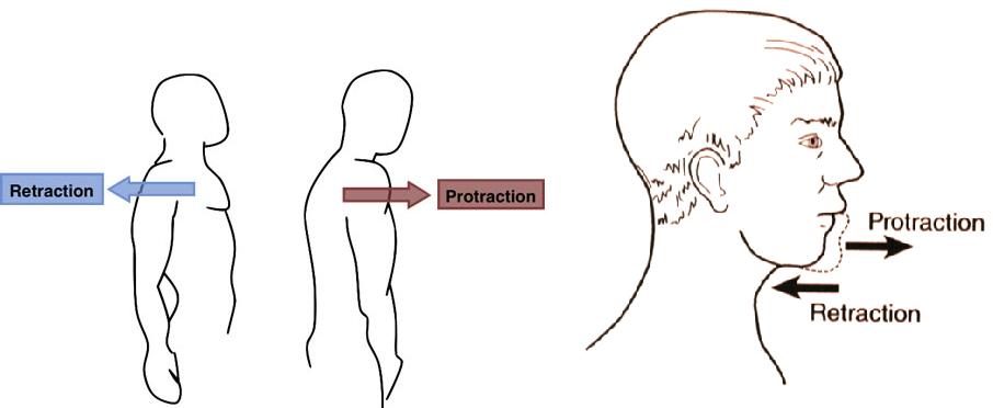 Protraksiyon ve retraksiyon