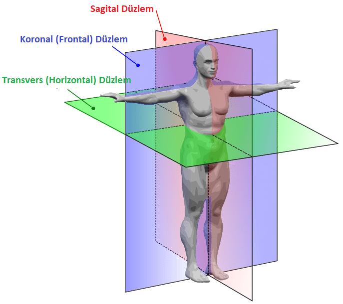 Anatomik düzlem