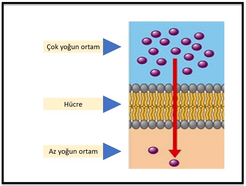 hücre, Difüzyon